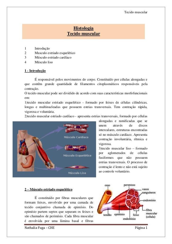 Tecido muscular                                  Histologia                               Tecido muscular1      Introdução...