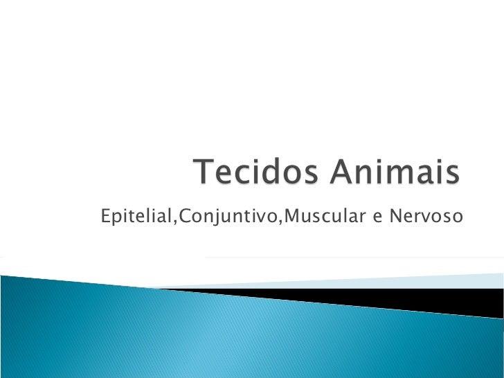 Epitelial,Conjuntivo,Muscular e Nervoso