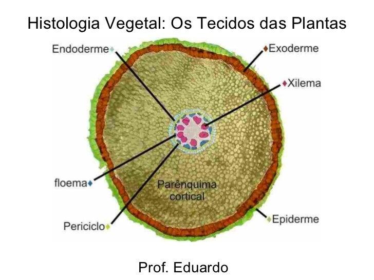 Histologia Vegetal: Os Tecidos das Plantas              Prof. Eduardo