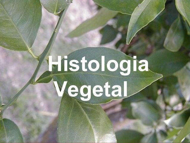 HistologiaVegetal