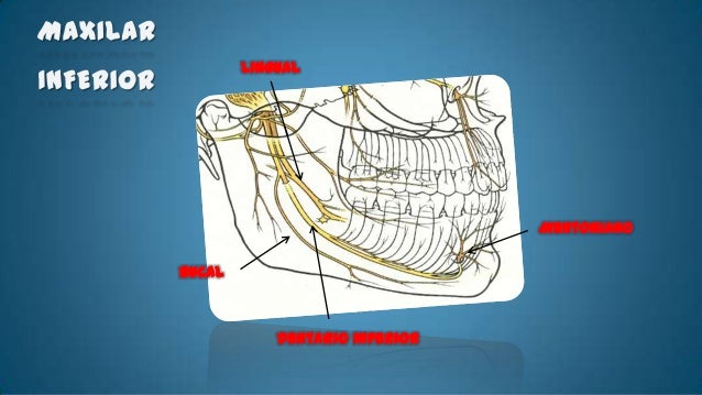 • Técnica Básica       -   Esta situado en la misma línea del           eje del 2do premolar.       -   En el punto de uni...