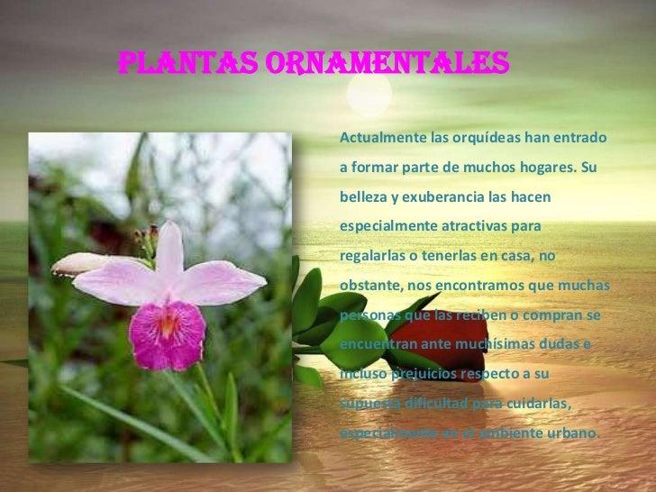 Tecnicas de cuidado de plantas y animales for Definicion de plantas ornamentales