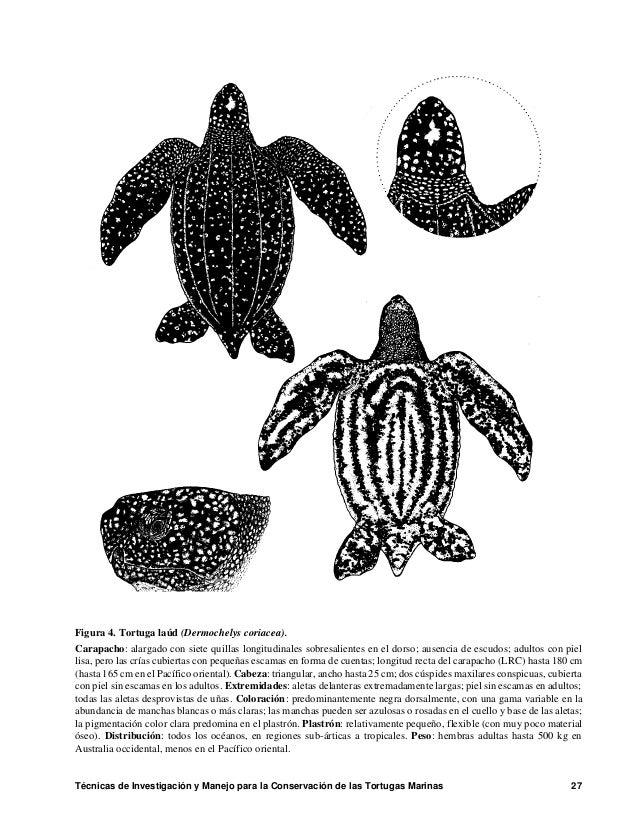 Tecnicas De Investigacion Y Manejo Para La Conservación De Las Tortug