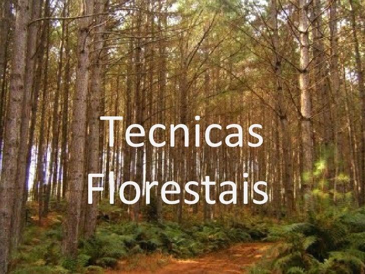 Tecnicas Florestais