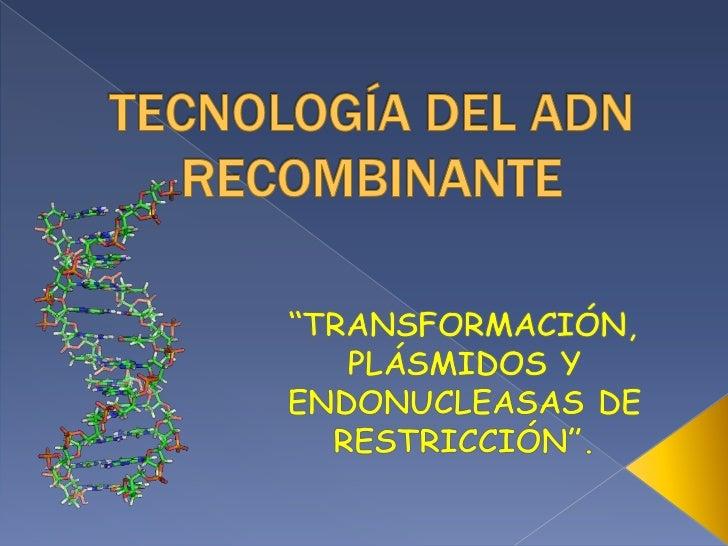 """TECNOLOGÍA DEL ADN RECOMBINANTE<br />""""TRANSFORMACIÓN, PLÁSMIDOS Y ENDONUCLEASAS DE RESTRICCIÓN"""".<br />"""