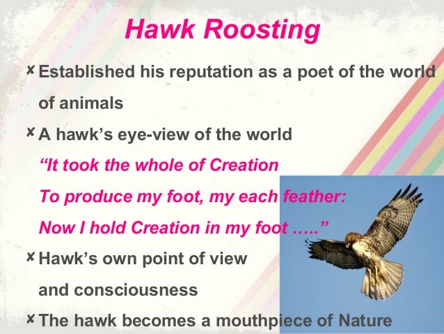 "ted huges hawk roosting 95 the relationship between man and animal in ted hughes' poems relations entre l'homme et les animaux dans les poemes de abstract: this paper discusses the significance of ted hughes's animal poems, and find out the in ""hawk roosting"", the poet plunged into the hawk's."