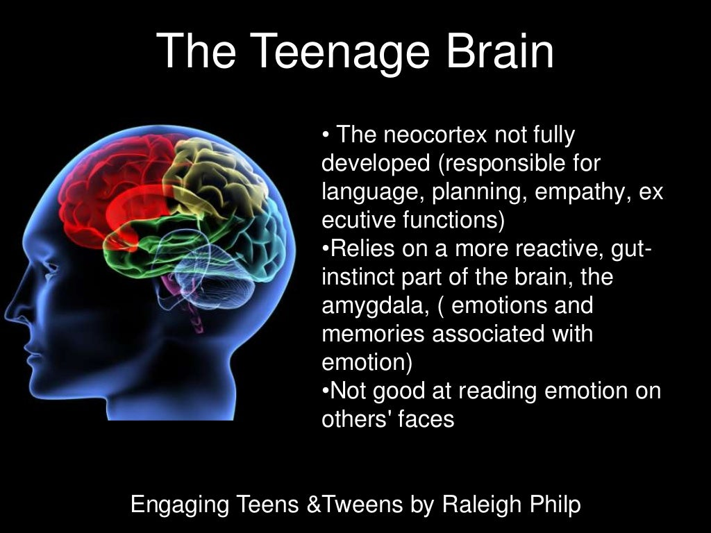 teenage brain development not considered in This is the pre-frontal cortex and it is the 'calm down', sensible, logical part of the brain that is able to consider consequences and put the brakes on emotion, behaviour or decisions that might cause trouble.