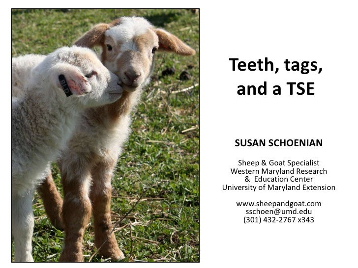 Teeth, tags, and a TSE<br />SUSAN SCHOENIANSheep & Goat SpecialistWestern Maryland Research &  Education CenterUniversity ...