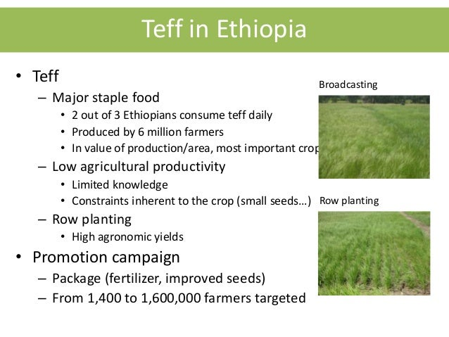 teff production in ethiopia pdf