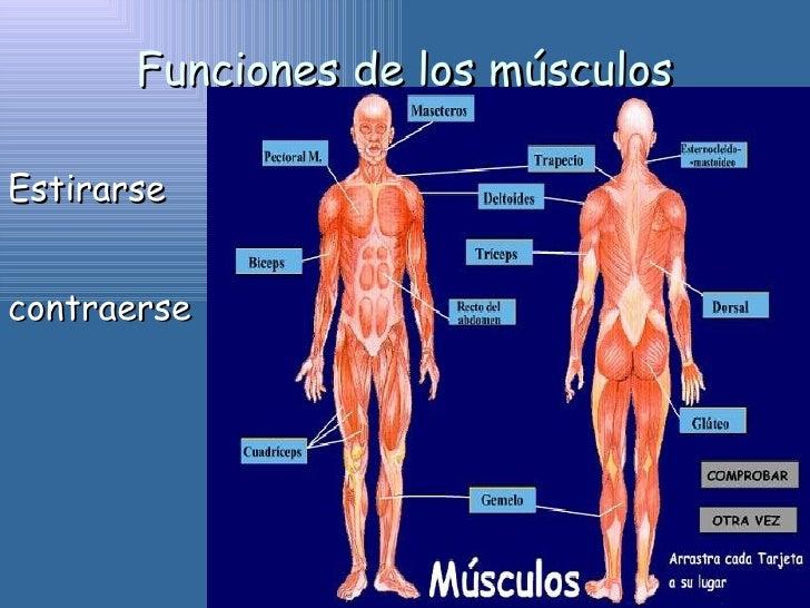 muscular ahogo