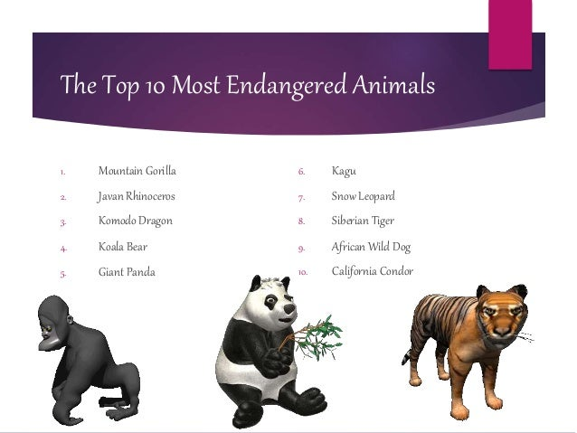 the endangerment of the spectacles bear species The ultimate multimedia guide to the world's endangered species favourite unloved species – spectacled bear species of bear, spectacled bears are.