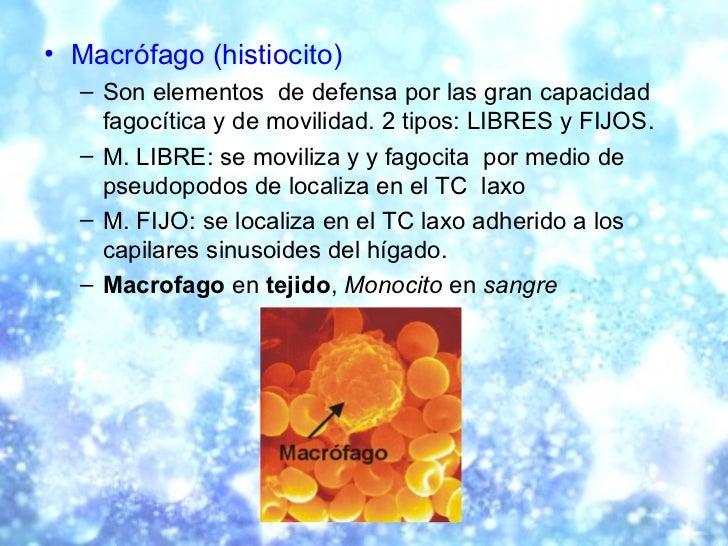 <ul><li>Macrófago (histiocito) </li></ul><ul><ul><li>Son elementos  de defensa por las gran capacidad fagocítica y de movi...
