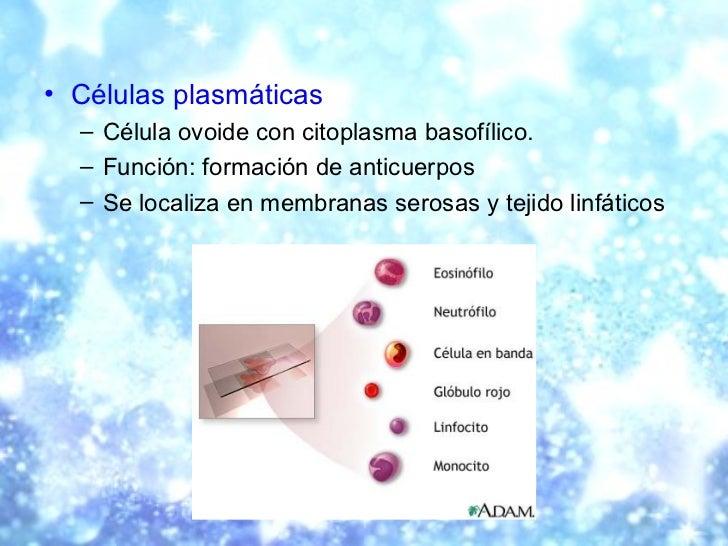 <ul><li>Células plasmáticas </li></ul><ul><ul><li>Célula ovoide con citoplasma basofílico.  </li></ul></ul><ul><ul><li>Fun...