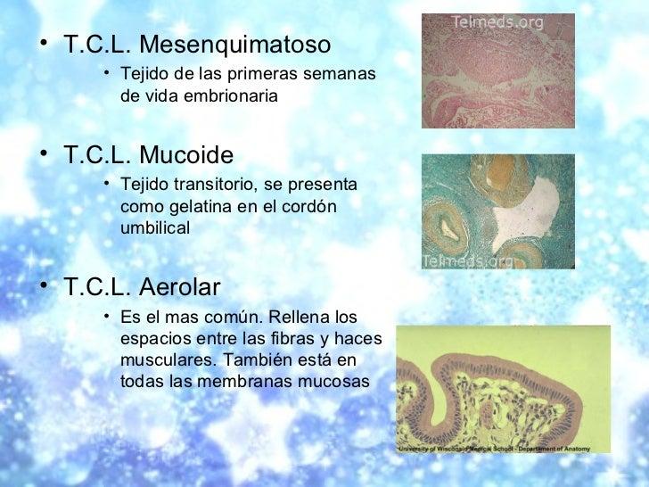 <ul><li>T.C.L. Mesenquimatoso </li></ul><ul><ul><ul><li>Tejido de las primeras semanas de vida embrionaria </li></ul></ul>...