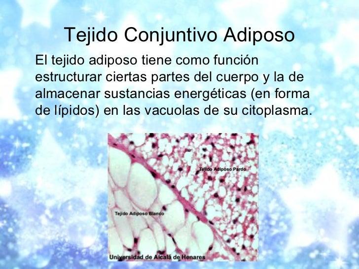 Tejido Conjuntivo Adiposo <ul><li>El tejido adiposo tiene como función estructurar ciertas partes del cuerpo y la de almac...
