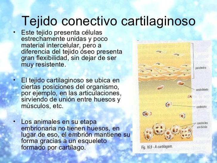 Tejido conectivo cartilaginoso <ul><li>Este tejido presenta células estrechamente unidas y poco material intercelular, per...