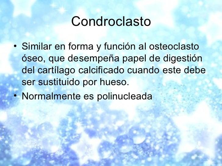 Condroclasto <ul><li>Similar en forma y función al osteoclasto óseo, que desempeña papel de digestión del cartílago calcif...