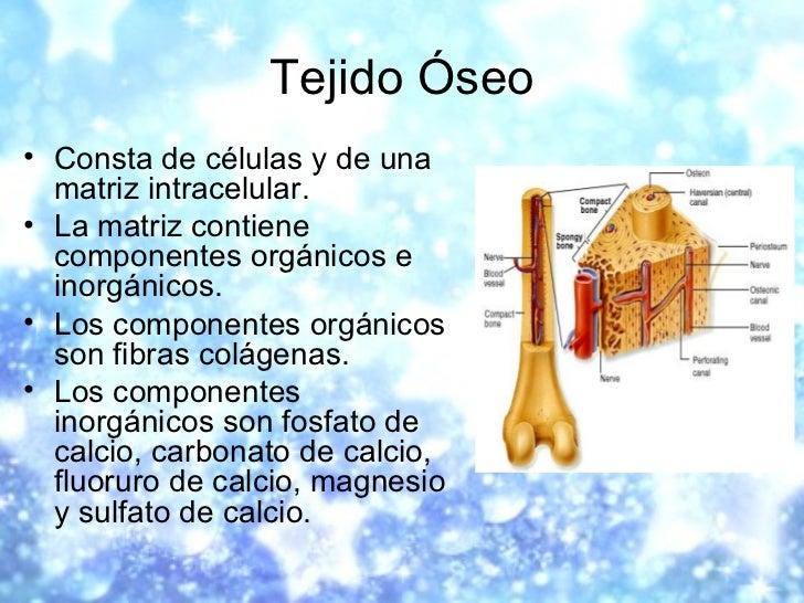 Tejido Óseo <ul><li>Consta de células y de una matriz intracelular.  </li></ul><ul><li>La matriz contiene componentes orgá...