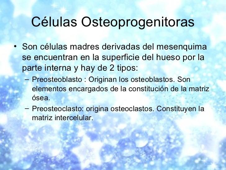 Células Osteoprogenitoras <ul><li>Son células madres derivadas del mesenquima se encuentran en la superficie del hueso por...