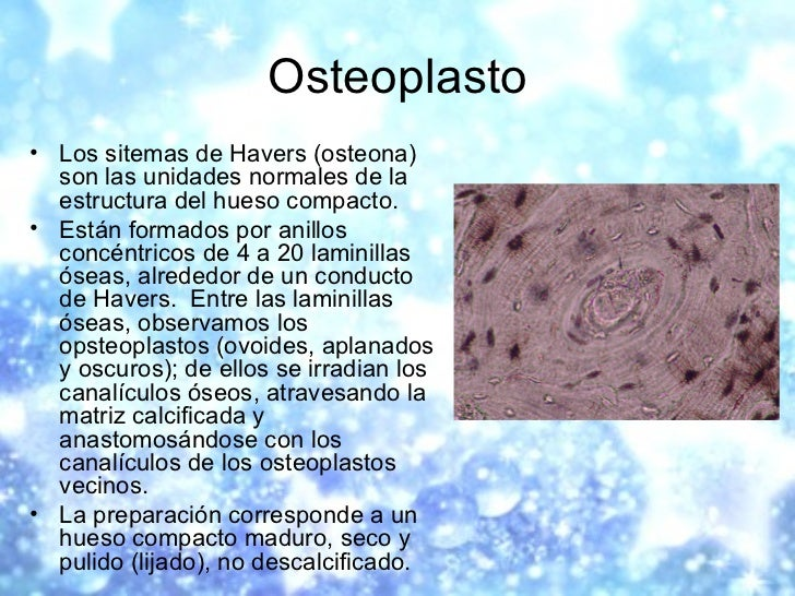 Osteoplasto <ul><li>Los sitemas de Havers (osteona) son las unidades normales de la estructura del hueso compacto.  </li><...