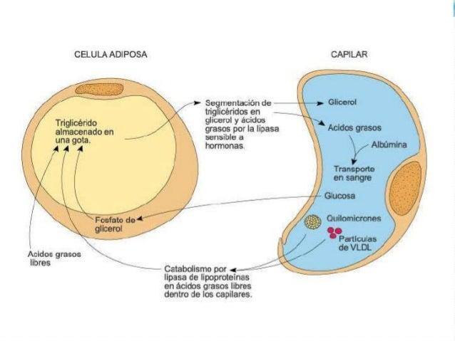 efecto de los esteroides anabolicos