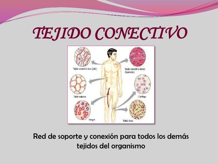 TEJIDO CONECTIVO <br />Red de soporte y conexión para todos los demás tejidos del organismo<br />