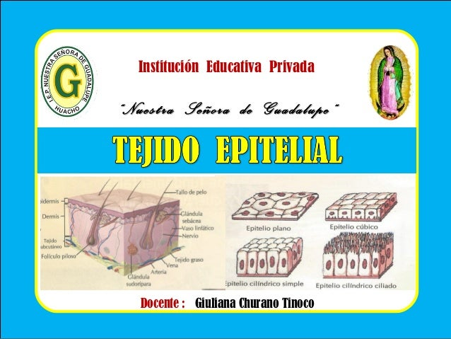 """Institución Educativa Privada """"""""Nuestra Señora de Guadalupe""""Nuestra Señora de Guadalupe"""" Docente : Giuliana Churano Tinoco"""