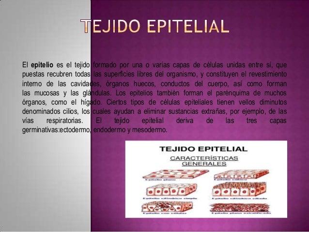 El epitelio es el tejido formado por una o varias capas de células unidas entre sí, que puestas recubren todas las superfi...