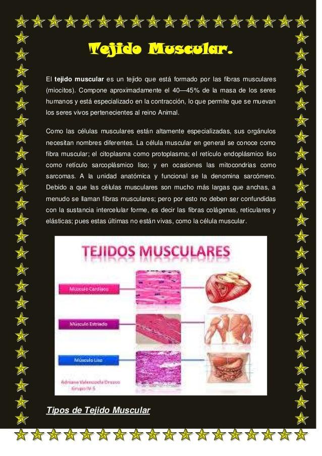 Tejido Muscular. El tejido muscular es un tejido que está formado por las fibras musculares (miocitos). Compone aproximada...