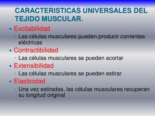 muscular acortar