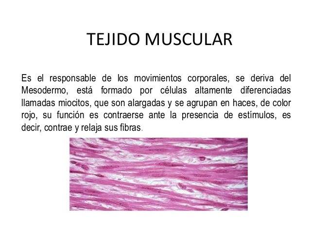 tejido-muscular-1-638.jpg?cb=1391845585