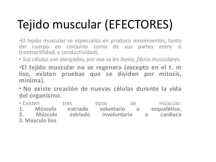 Tejido muscular (EFECTORES)•El tejido muscular se especializa en producir movimientos, tantodel cuerpo en conjunto como de...