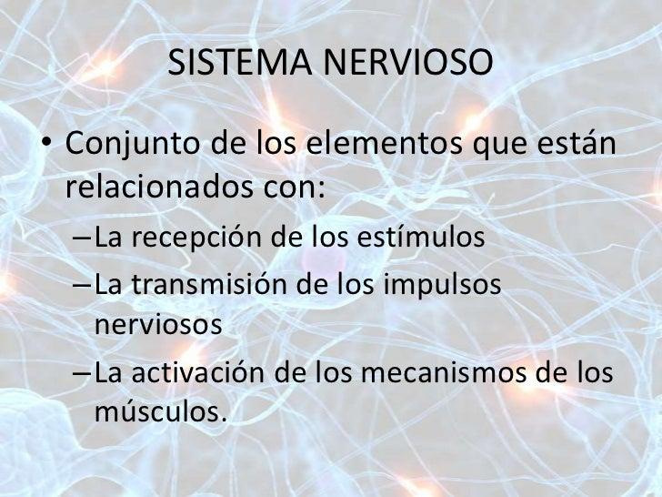 ANATOMIA Y FISIOLOGIA DEL SISTEMA NERVIOSO Y MUSCULAR Slide 2