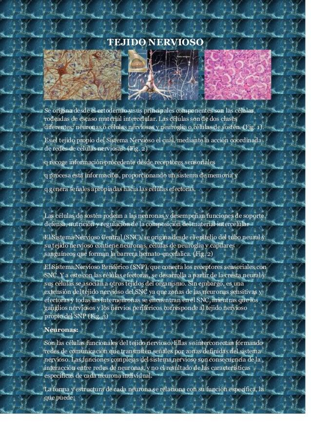 TEJIDO NERVIOSO  Se origina desde el ectodermo y sus principales componentes son las células, rodeadas de escaso material ...