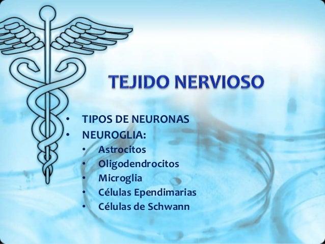 • TIPOS DE NEURONAS • NEUROGLIA: • Astrocitos • Oligodendrocitos • Microglia • Células Ependimarias • Células de Schwann