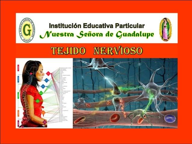 VI - Unidad : Biología TEMA: TEJIDO NERVIOSO I.E.P «Nuestra Señora de Guadalupe» El tejido nervioso se encarga de la gener...