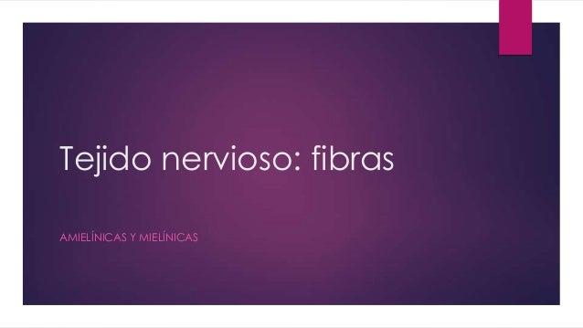 Tejido nervioso: fibras AMIELÍNICAS Y MIELÍNICAS