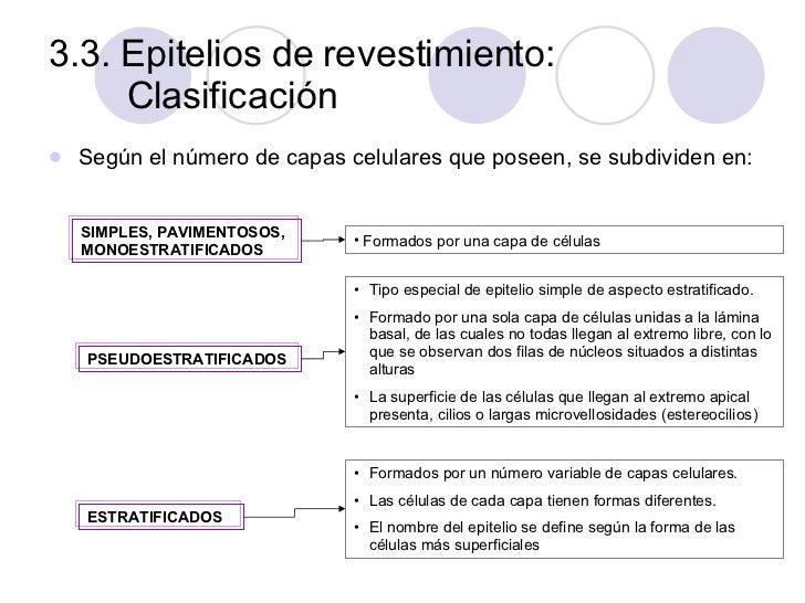 3.3. Epitelios de revestimiento: Clasificación <ul><li>Según el número de capas celulares que poseen, se subdividen en: </...