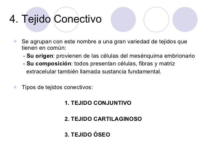4. Tejido Conectivo  <ul><li>Se agrupan con este nombre a una gran variedad de tejidos que tienen en común: </li></ul><ul>...