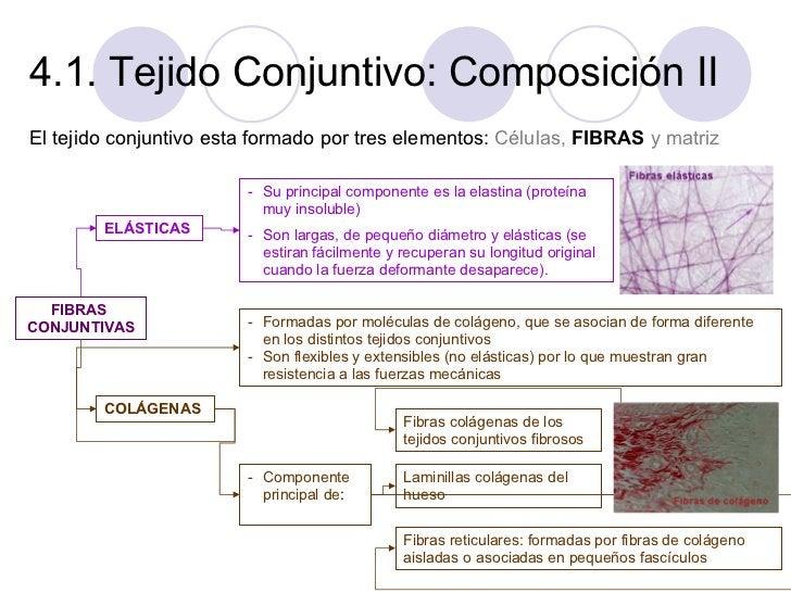 4.1. Tejido Conjuntivo: Composición II <ul><li>El tejido conjuntivo esta formado por tres elementos:  Células,   FIBRAS  y...