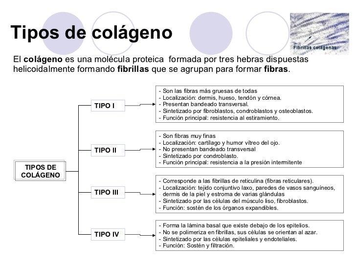 Tipos de colágeno <ul><li>El  colágeno  es una molécula proteica  formada por tres hebras dispuestas helicoidalmente forma...