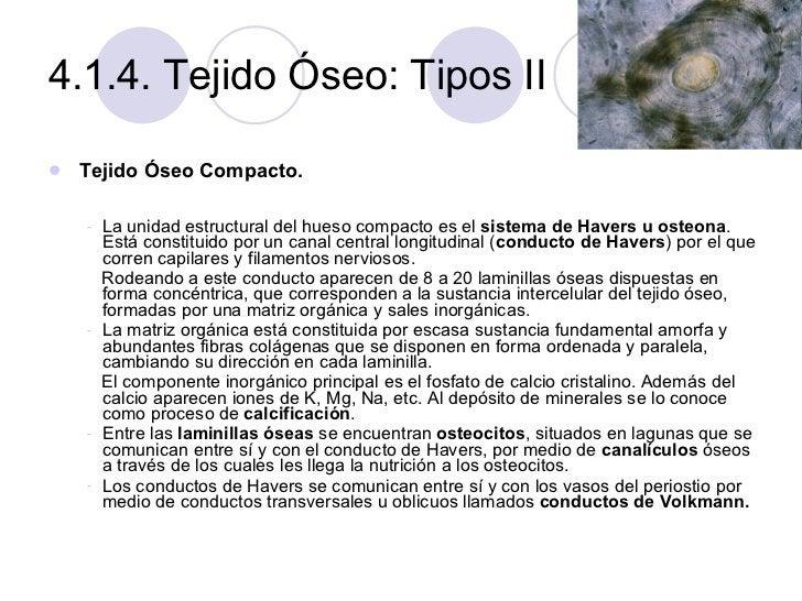 4.1.4. Tejido Óseo: Tipos II <ul><li>Tejido Óseo Compacto. </li></ul><ul><li>La unidad estructural del hueso compacto es e...