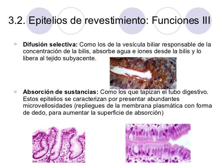 3.2. Epitelios de revestimiento: Funciones III <ul><li>Difusión selectiva:  Como los de la vesícula biliar   responsable d...