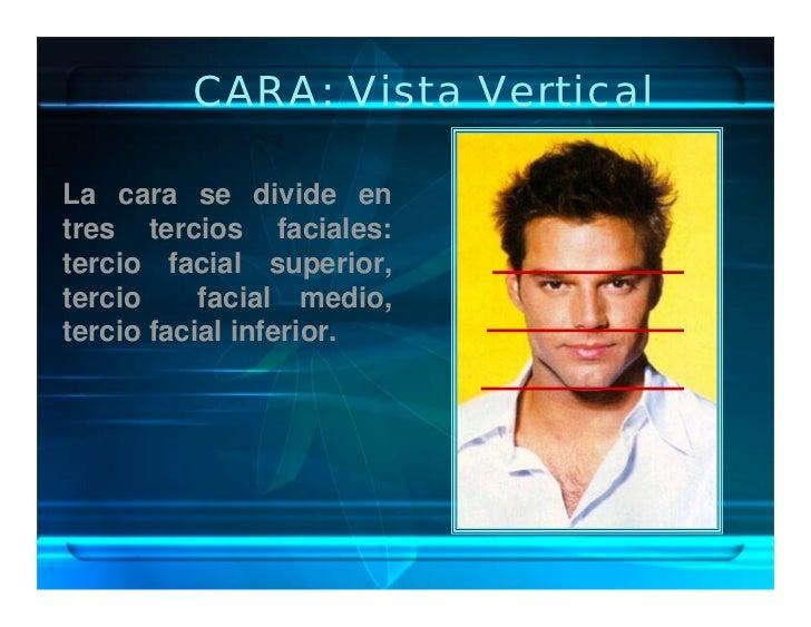 CARA: Vista Vertical  La cara se divide en tres tercios faciales: tercio facial superior, tercio     facial medio, tercio ...
