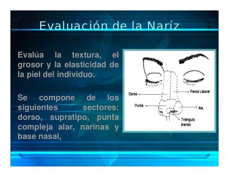 Evaluación de la Naríz  Evalúa la textura, el grosor y la elasticidad de la piel del individuo.  Se compone de los siguien...