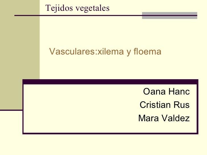 Tejidos vegetales Vasculares:xilema y floema Oana Hanc Cristian Rus Mara Valdez