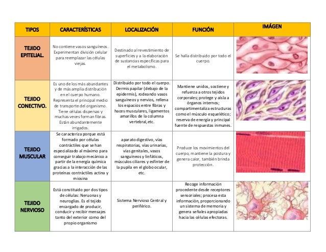 Tejidos anatomía