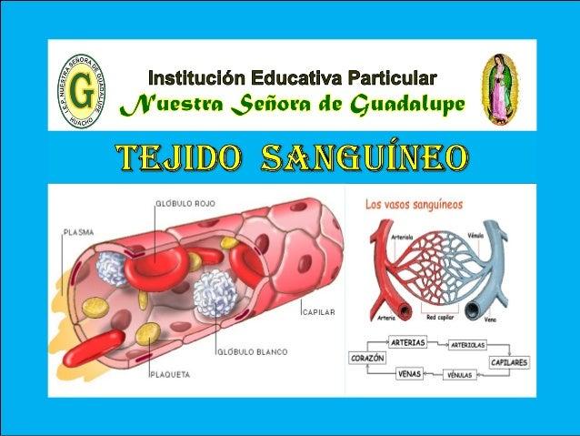 VI - Unidad : Biología TEMA: CLASIFICACIÓN DEL TEJIDO CONECTIVO I.E.P «Nuestra Señora de Guadalupe» Es un tejido conectivo...