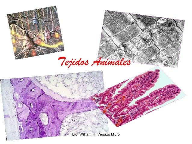 Tejidos Animales Licº William H. Vegazo Muro