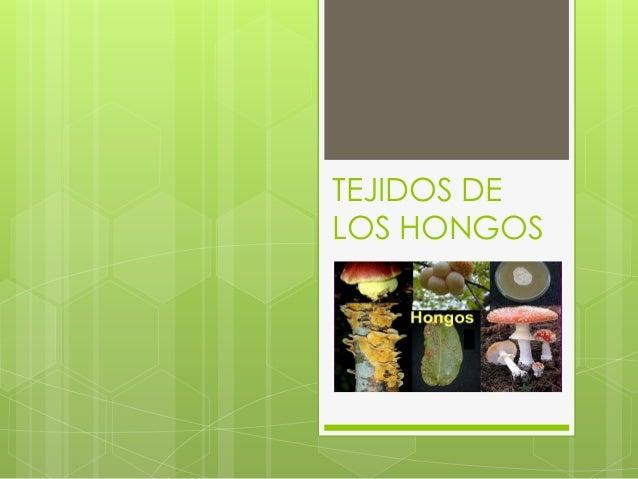 TEJIDOS DE LOS HONGOS